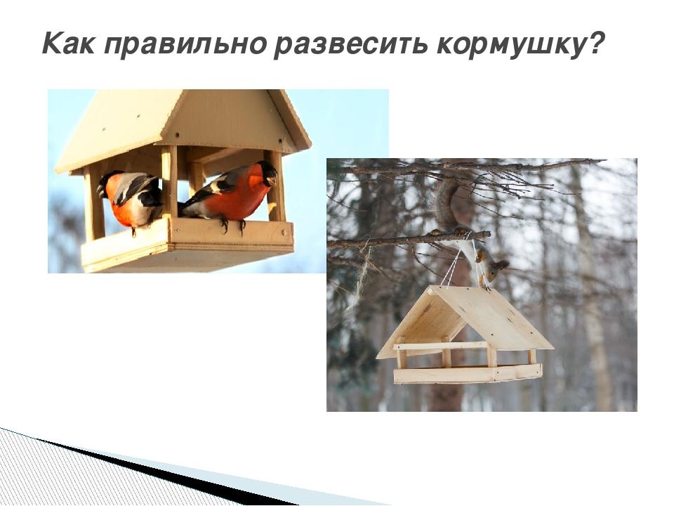 Как сделать правильно кормушку для птиц