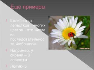 Еще примеры Количество лепестков многих цветов - это числа из последовательно