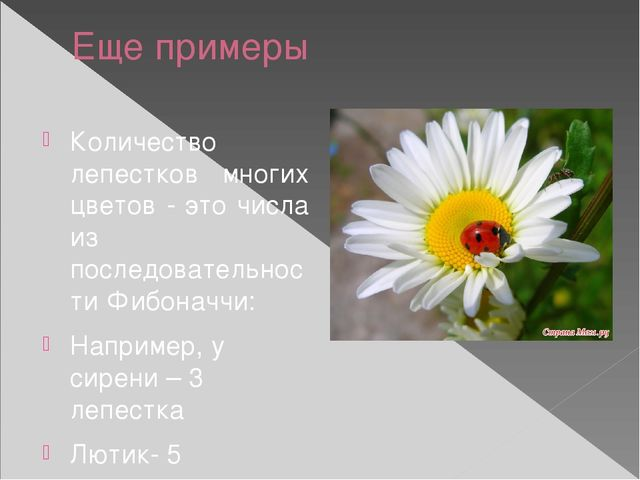 Еще примеры Количество лепестков многих цветов - это числа из последовательно...