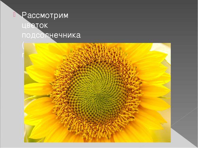 Рассмотрим цветок подсолнечника (или просто подсолнух)