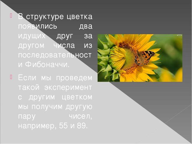 В структуре цветка появились два идущих друг за другом числа из последователь...