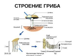 СТРОЕНИЕ ГРИБА Филиппова Наталья Юрьевна учитель биологии категория высшая