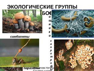 ЭКОЛОГИЧЕСКИЕ ГРУППЫ ГРИБОВ симбионты паразиты хищники сапротрофы Филиппова Н