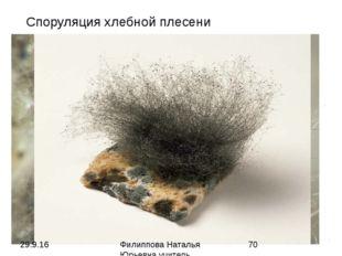 Споруляция хлебной плесени Филиппова Наталья Юрьевна учитель биологии категор