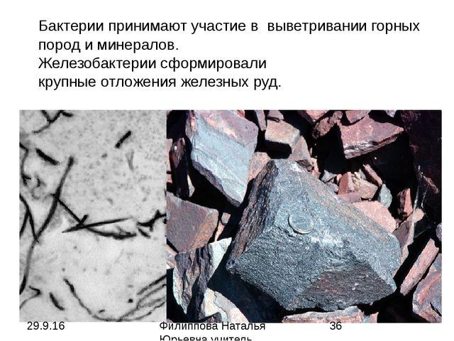 Бактерии принимают участие в выветривании горных пород и минералов. Железобак...