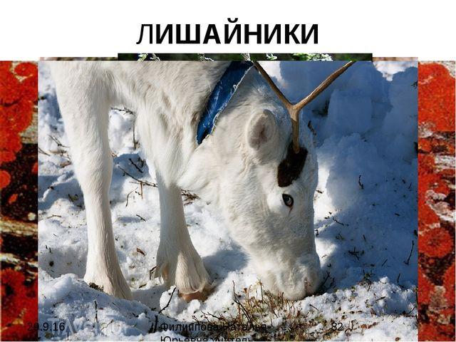 ЛИШАЙНИКИ Филиппова Наталья Юрьевна учитель биологии категория высшая