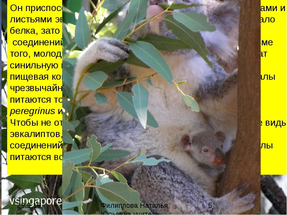 эврифагия (греч. eurys широкий + phagein есть, пожирать; син.: всеядность, па...