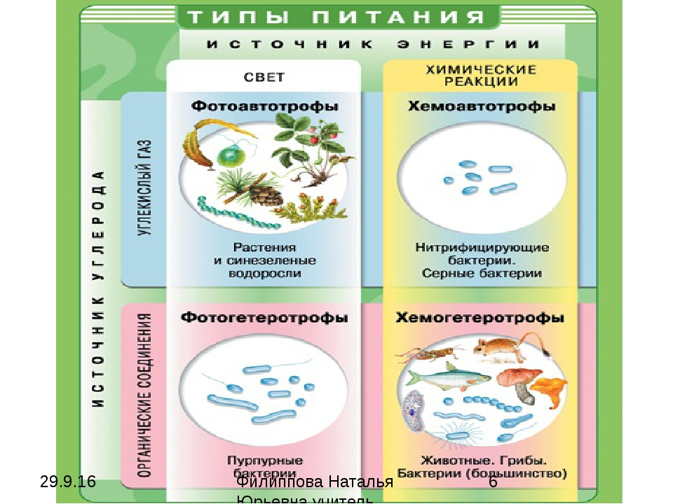 Филиппова Наталья Юрьевна учитель биологии категория высшая