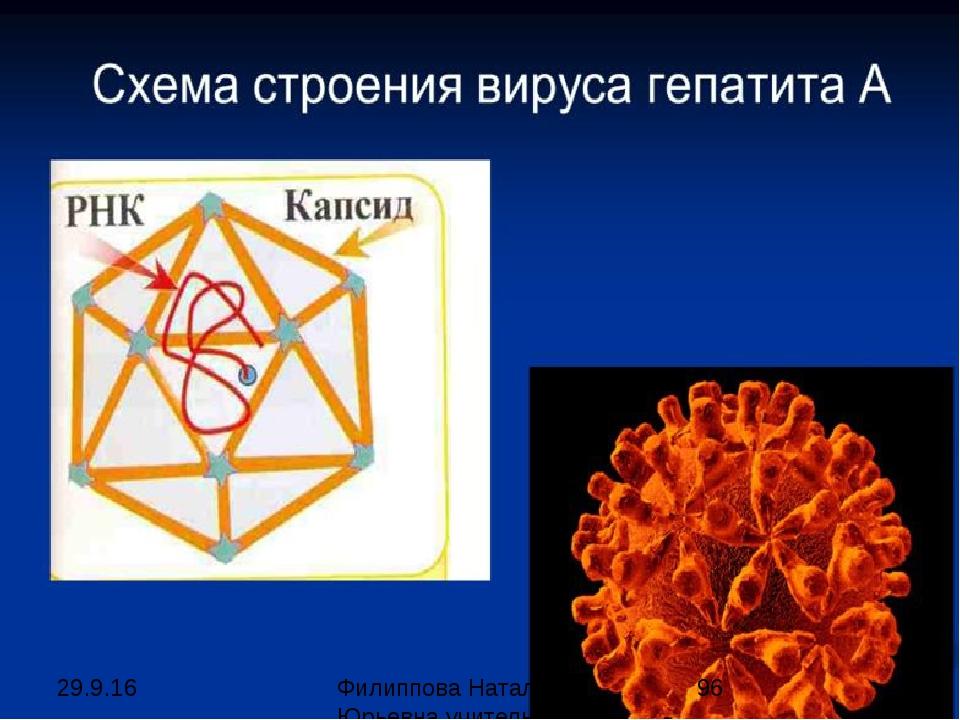 Ebolavirus Филиппова Наталья Юрьевна учитель биологии категория высшая
