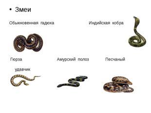 Змеи Обыкновенная гадюка Индийская кобра Гюрза Амурский полоз Песчаный