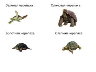 Зеленая черепаха Слоновая черепаха Болотная черепаха Степная черепаха