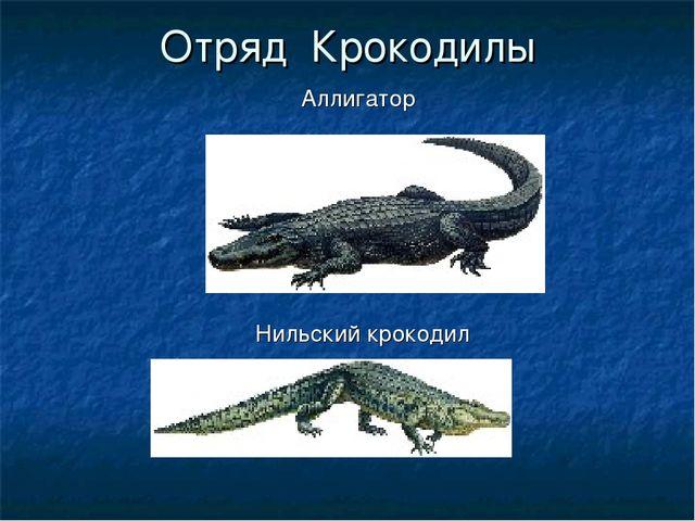 Отряд Крокодилы Аллигатор Нильский крокодил