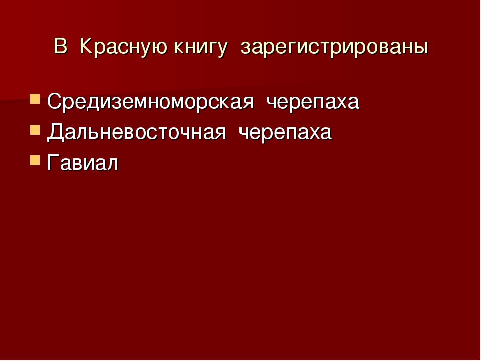 В Красную книгу зарегистрированы Средиземноморская черепаха Дальневосточная ч...