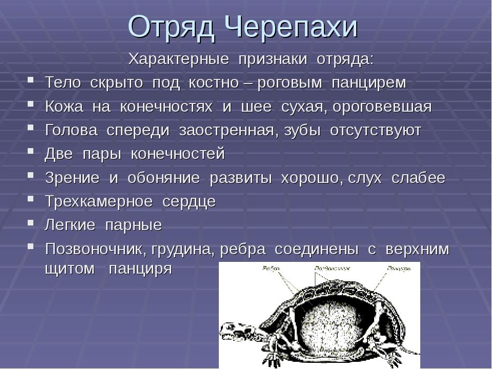 Отряд Черепахи Характерные признаки отряда: Тело скрыто под костно – роговым...