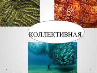 КОЛЛЕКТИВНАЯ