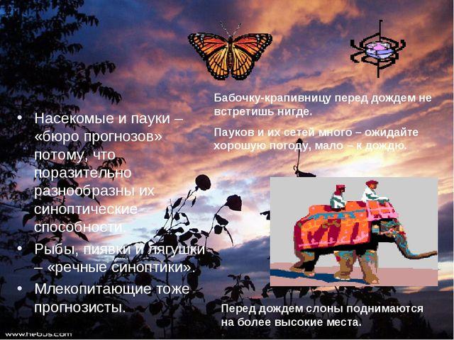 Насекомые и пауки – «бюро прогнозов» потому, что поразительно разнообразны их...