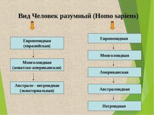 Вид Человек разумный (Homo sapiens) Европеоидная (евразийская) Европеоидная М