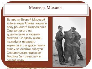 Медведь Михаил. Во время Второй Мировой войны наша Армия нашла в лесу раненог