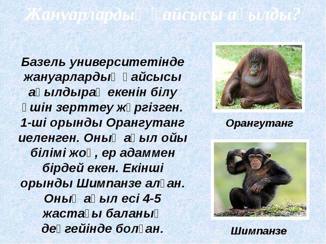 Жануарлардың қайсысы ақылды? Орангутанг Шимпанзе Базель университетінде жануа...