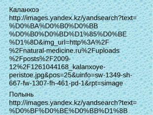 Каланхоэ http://images.yandex.kz/yandsearch?text=%D0%BA%D0%B0%D0%BB%D0%B0%D0%