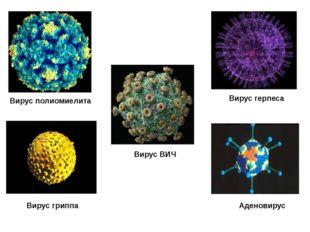 Вирус полиомиелита Вирус гриппа Вирус герпеса Вирус ВИЧ Аденовирус
