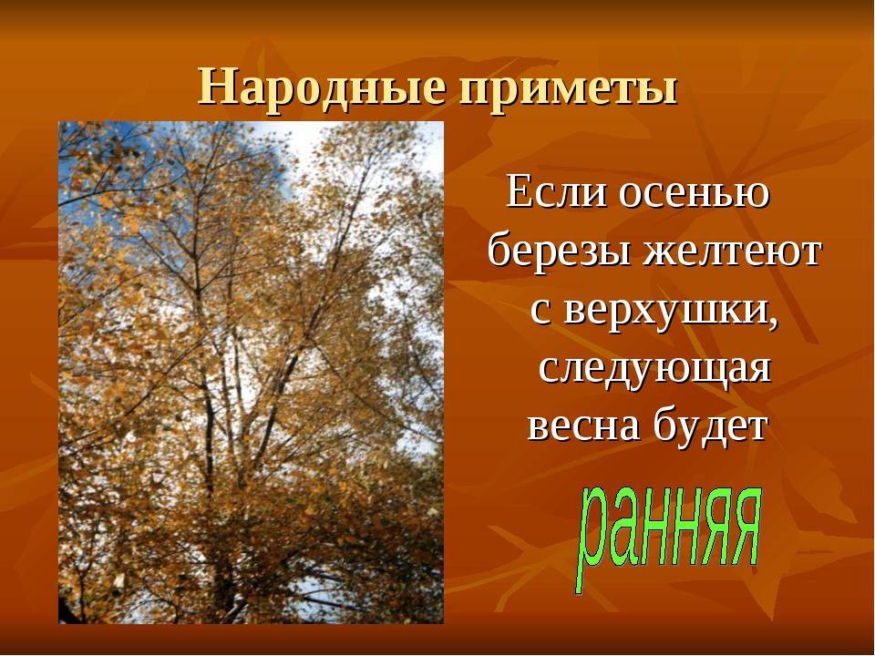 Народные приметы Если осенью березы желтеют с верхушки, следующая весна будет