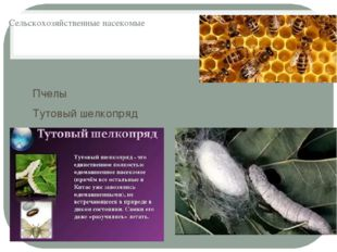 Сельскохозяйственные насекомые Пчелы Тутовый шелкопряд