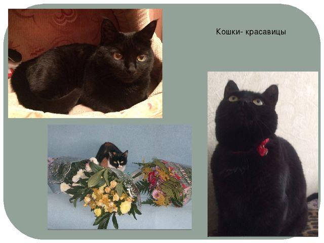 Кошки- красавицы