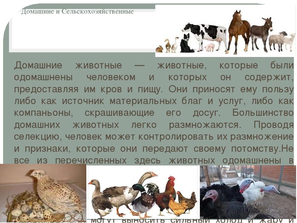 Домашние и Сельскохозяйственные Домашние животные — животные, которые были од...