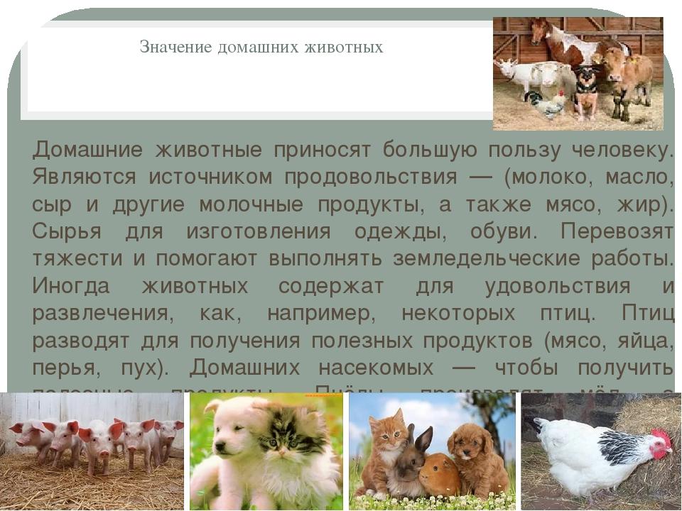 Значение домашних животных Домашние животные приносят большую пользу человеку...