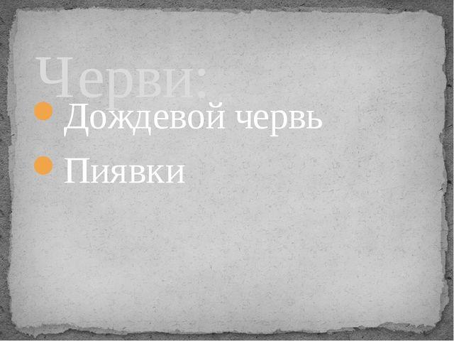 Дождевой червь Пиявки Черви: