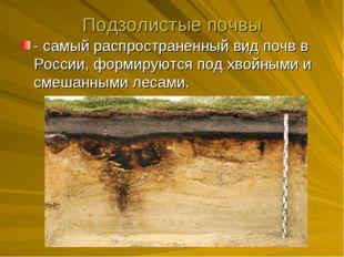 Подзолистые почвы - самый распространенный вид почв в России, формируются под