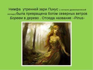 Нимфа утренней зари Пинус ( согласно древнегреческой легенде) была превращена