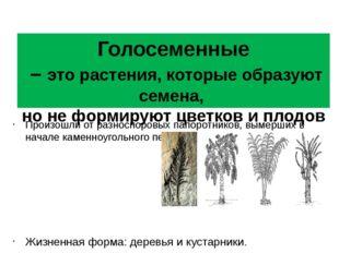 Голосеменные – это растения, которые образуют семена, но не формируют цветков