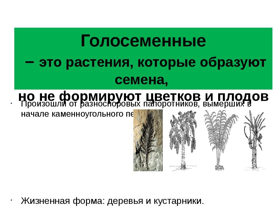 Голосеменные – это растения, которые образуют семена, но не формируют цветков...