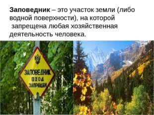 Заповедник – это участок земли (либо водной поверхности), на которой запреще