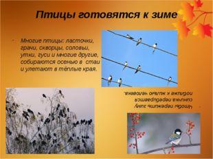Птицы готовятся к зиме Многие птицы: ласточки, грачи, скворцы, соловьи, утки,