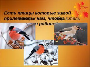 Есть птицы которые зимой прилетают к нам, чтобы полакомиться рябиной снегирь