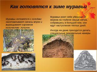Как готовятся к зиме муравьи Муравьи готовятся к холодам: заготавливают запас