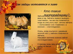 Как зайцы готовятся к зиме Кто такие листопаднички? Зайчиха может приносить п