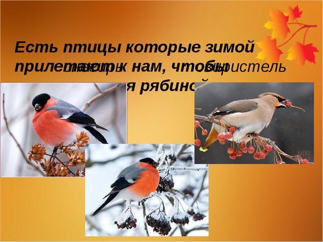 Есть птицы которые зимой прилетают к нам, чтобы полакомиться рябиной снегирь...