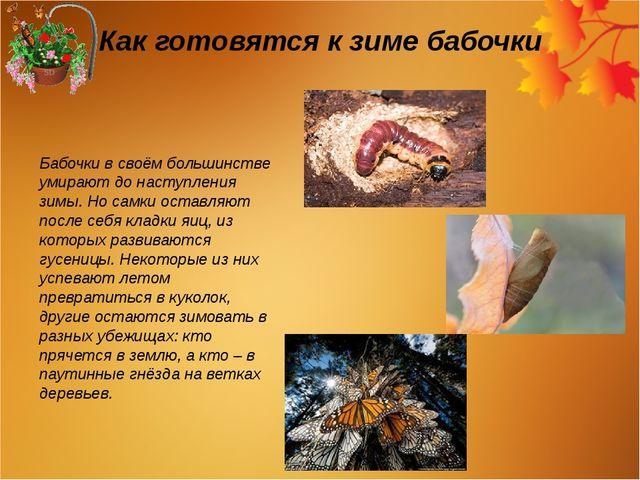Как готовятся к зиме бабочки Бабочки в своём большинстве умирают до наступлен...