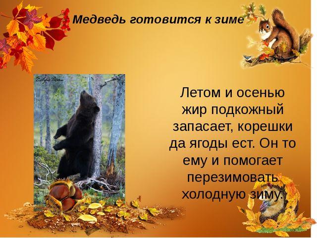 Медведь готовится к зиме Летом и осенью жир подкожный запасает, корешки да яг...