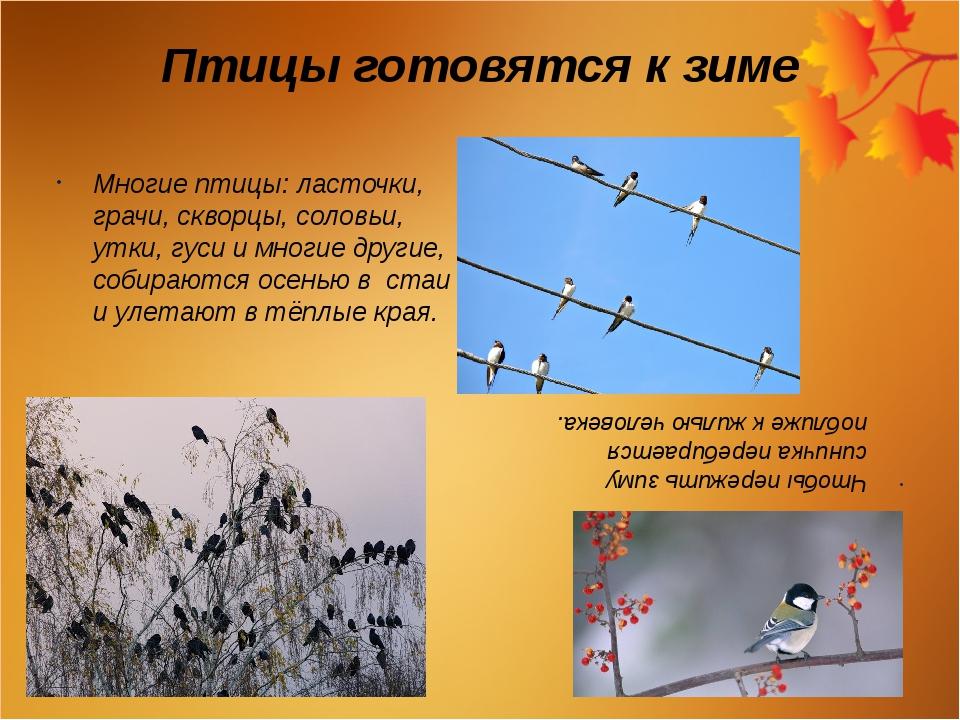 Птицы готовятся к зиме Многие птицы: ласточки, грачи, скворцы, соловьи, утки,...