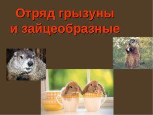 Отряд грызуны и зайцеобразные