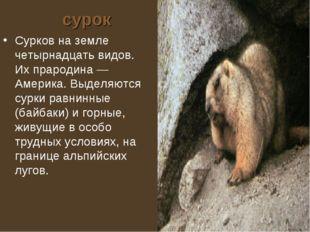 сурок Сурков на земле четырнадцать видов. Их прародина — Америка. Выделяются