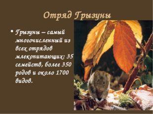 Отряд Грызуны Грызуны – самый многочисленный из всех отрядов млекопитающих: 3