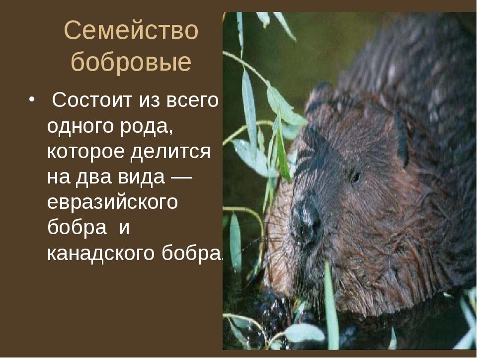 Семейство бобровые Состоит из всего одного рода, которое делится на два вида...