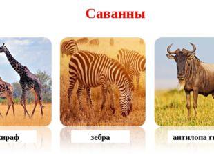 жираф зебра антилопа гну Саванны