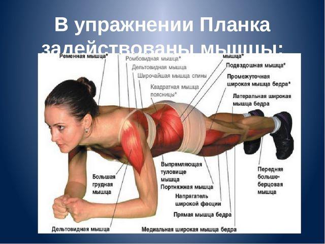 В упражнении Планка задействованы мышцы: